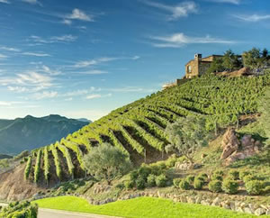 Southern California vineyards by American Luxury Limousine